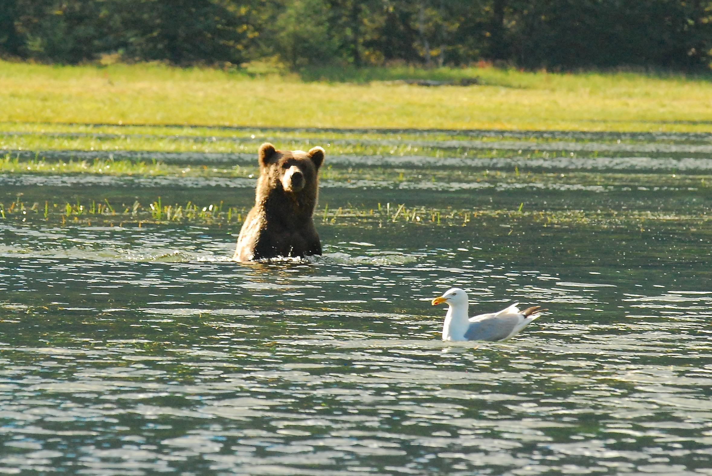 Our Favorite Alaskan Brown Bear Photos!