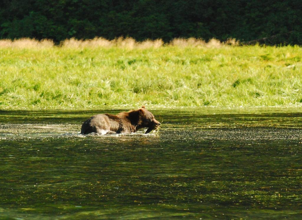 bear swim 5